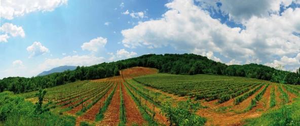 イピロスのブドウ畑