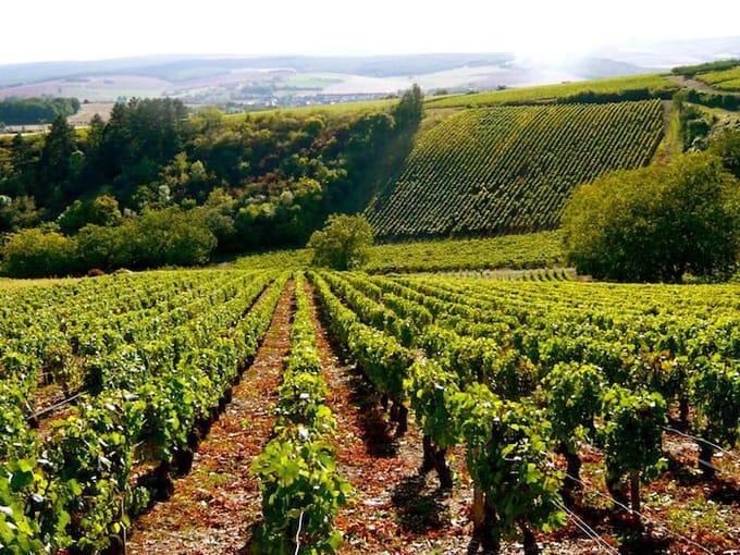 ブルゴーニュのブドウ畑の写真