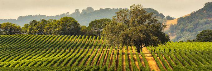 アメリカのブドウ畑の写真