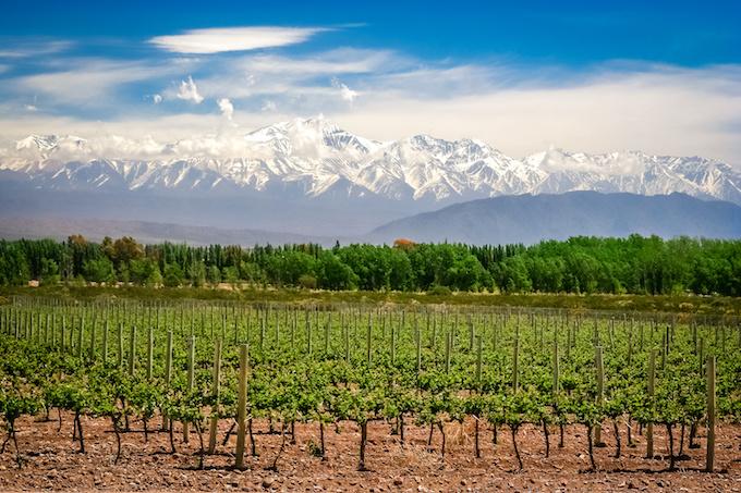 アルゼンチンのブドウ畑の写真